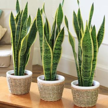 piante per camera da letto – Letizia Boccabella NATUROPATA